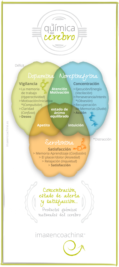 imagencoaching_blog_cerebro-quimica-1